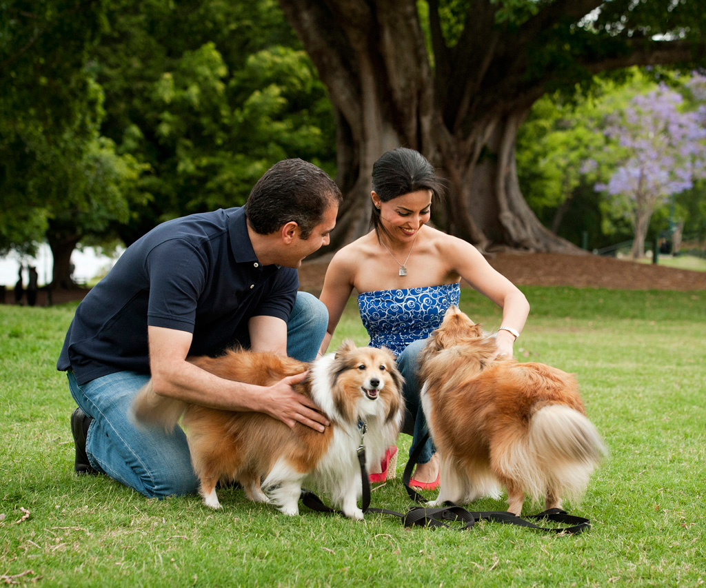 happy couple pat two fluffy Shetland sheepdogs on leash in New Farm Park Brisbane