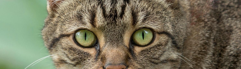 pet photography brisbane portrait cat