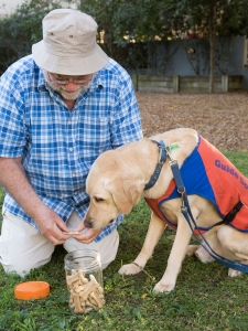brisbane, photography, pet photography, guide dogs, family photography