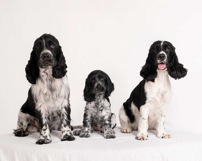 Puppy portraits at dog friendly brisbane family photography studio