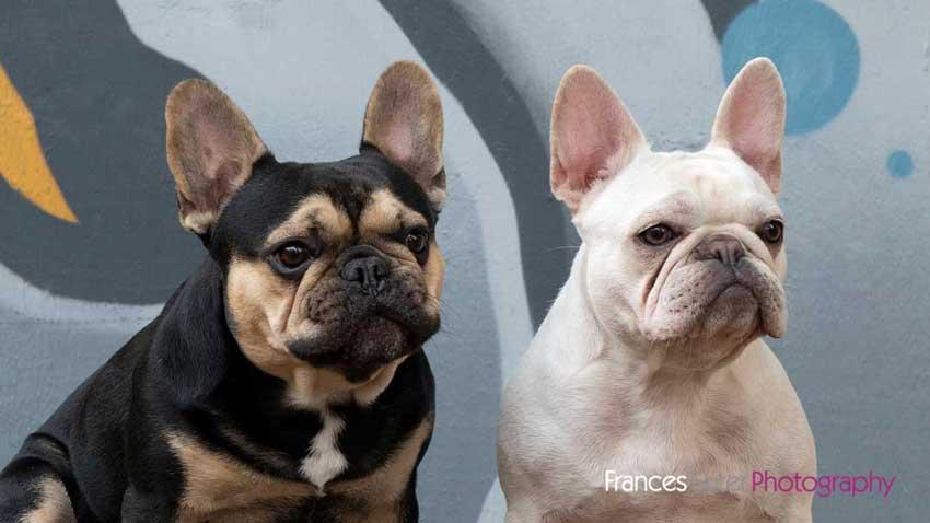 Fun pet friendly photoshoots Brisbane